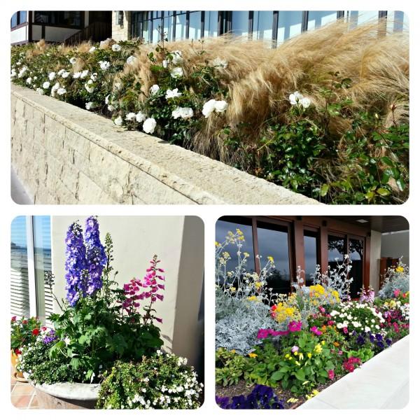 Garden and planter design