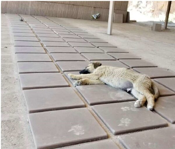 puppy sleeping on teraa cotta handmade tiles